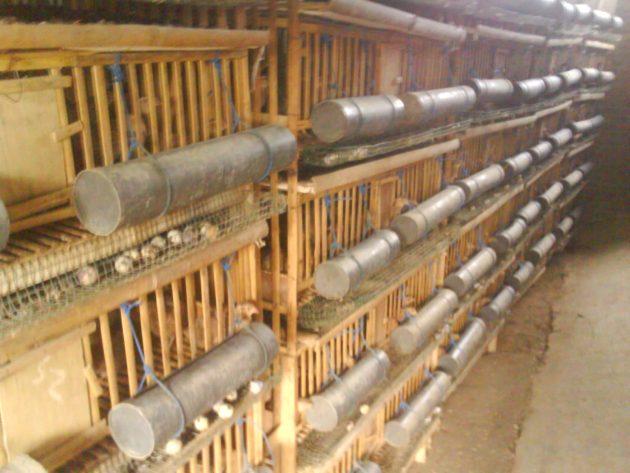 Memiliki Persiapan Alat Pakan Untuk Ternak Bebek Petelur
