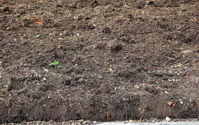 jenis tanah humus di Indonesia