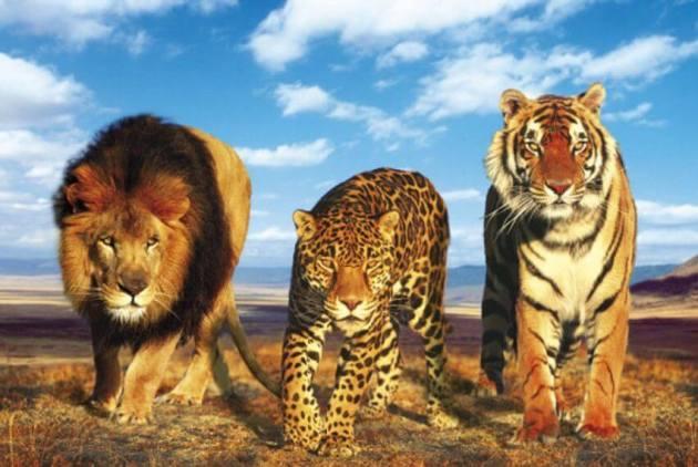 contoh Keanekaragaman Hayati Tingkat spesies hewan