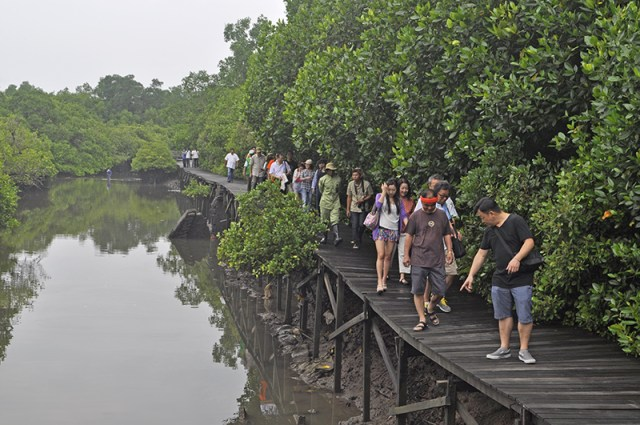 mangrove information center