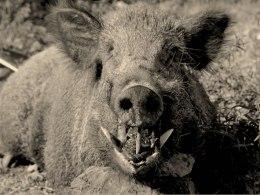 leak babi