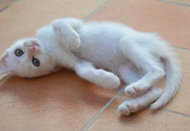 Primeros días de un gatito en casa