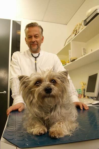 Úlcera colónica en perros