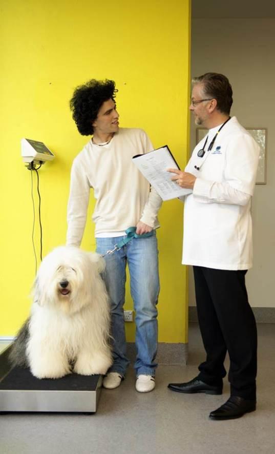 Diarrea larga duración en perros