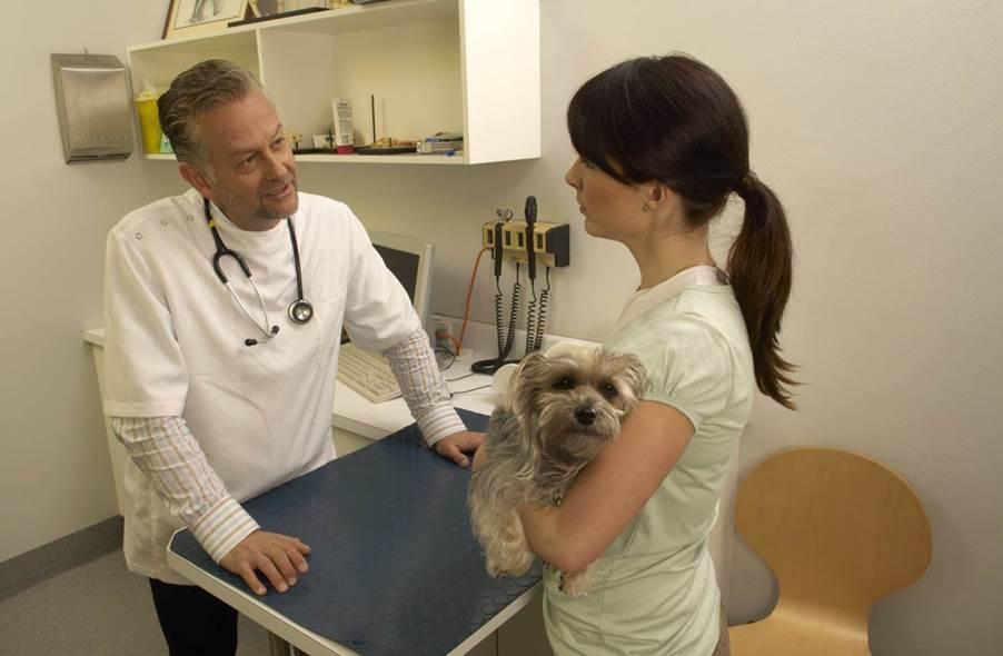 Diabetis (Hepatopatía) en perros