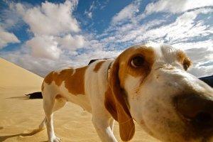 La edad de tu perro