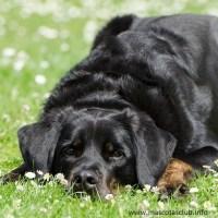 Cómo actuar con nuestro perro ante un golpe de calor
