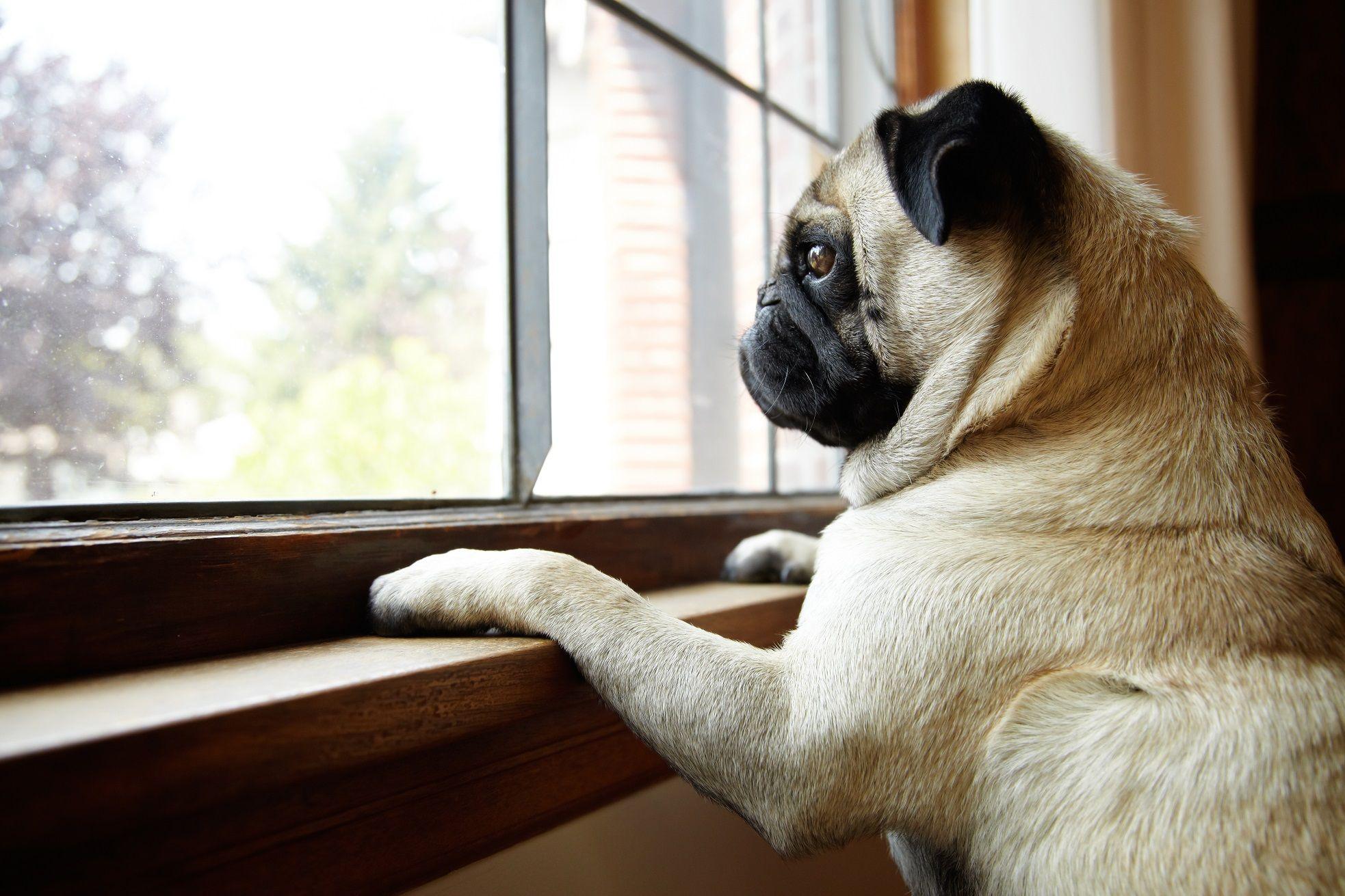 Ansiedad en perros – Síntomas y soluciones