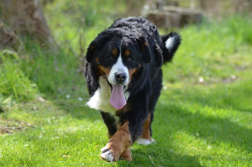 Evita la artrosis de tu mascota - HeelVet