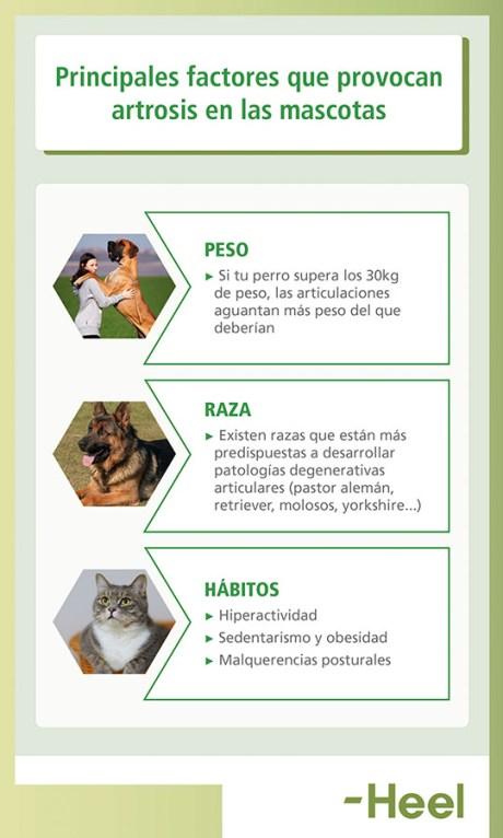 Factores para prevenir la artrosis - HeelVet