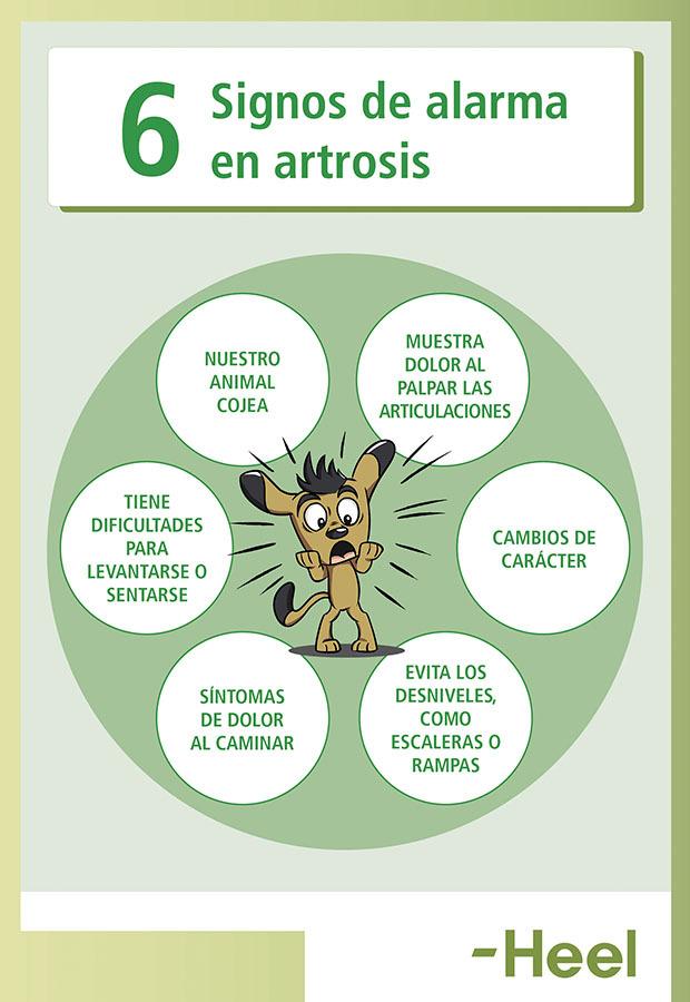 Signos de alarma de artrosis en perros y gatos