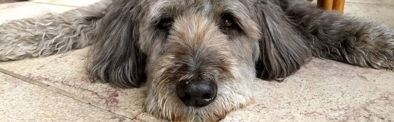 Propiedades relajantes del espino blanco para nuestro perro - HeelVet