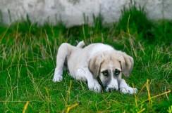 La tos de las perreras afecta a las vías respiratorias superiores - HeelVet