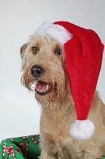 Navidad y situaciones de estrés en nuestra mascota - HeelVet
