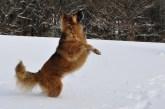 Síntomas artrosis en perros - HeelVet