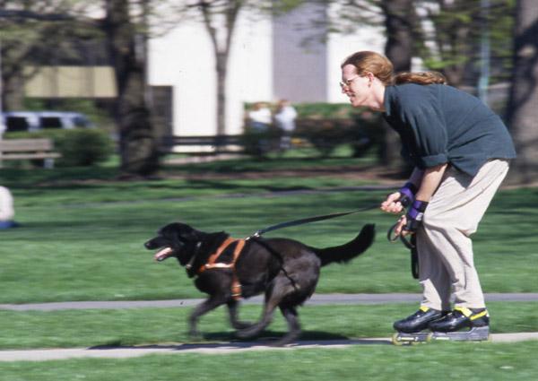 Rollerjoring: Patinando con arnés con tu perro