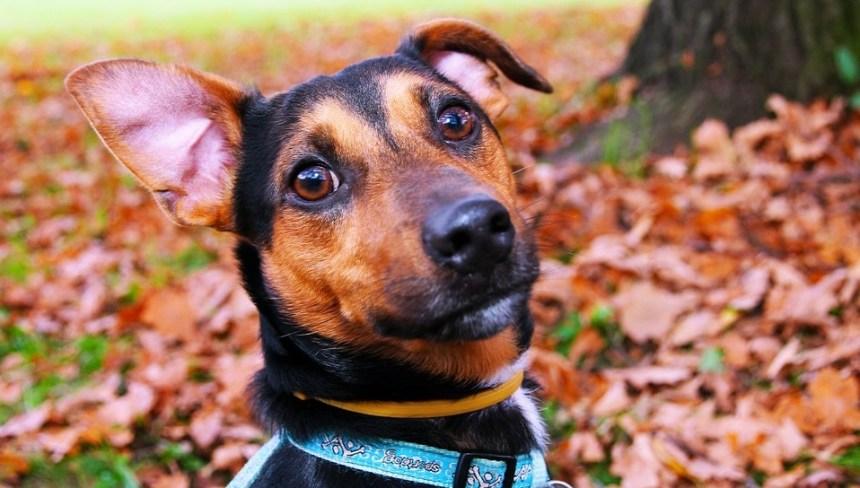 collar para perro mascotcity