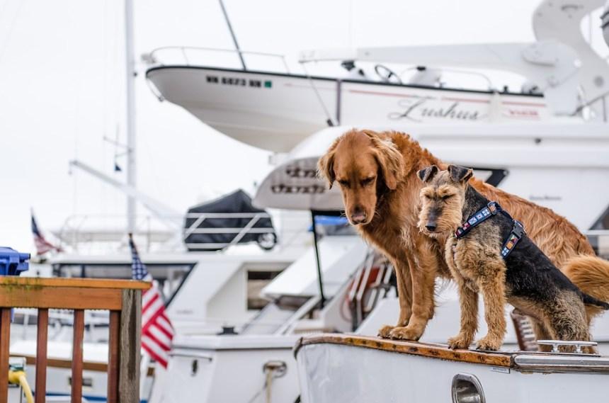 productos para viajar con perros