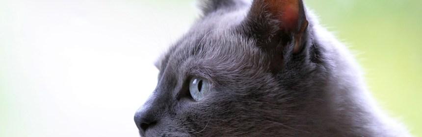 mascotcity distribuidor arneses gato