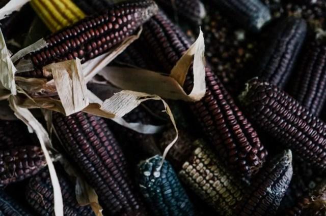 rituales-mexicanos-veracruz-siembre-maiz-milpa-clima