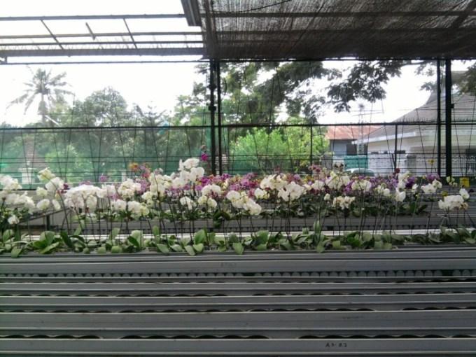 Penempatan Bunga Anggrek