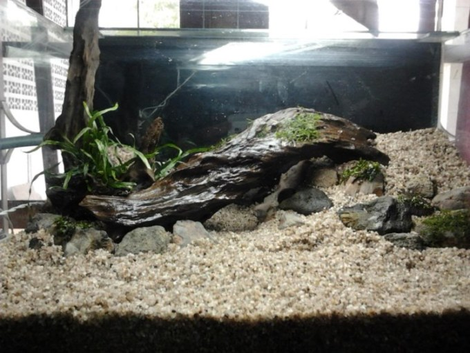 Top Layer Aquascape
