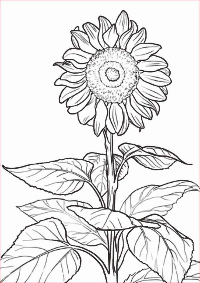 Gambar Sketsa Bunga Yang Mudah Dibuat Dan Sederhana