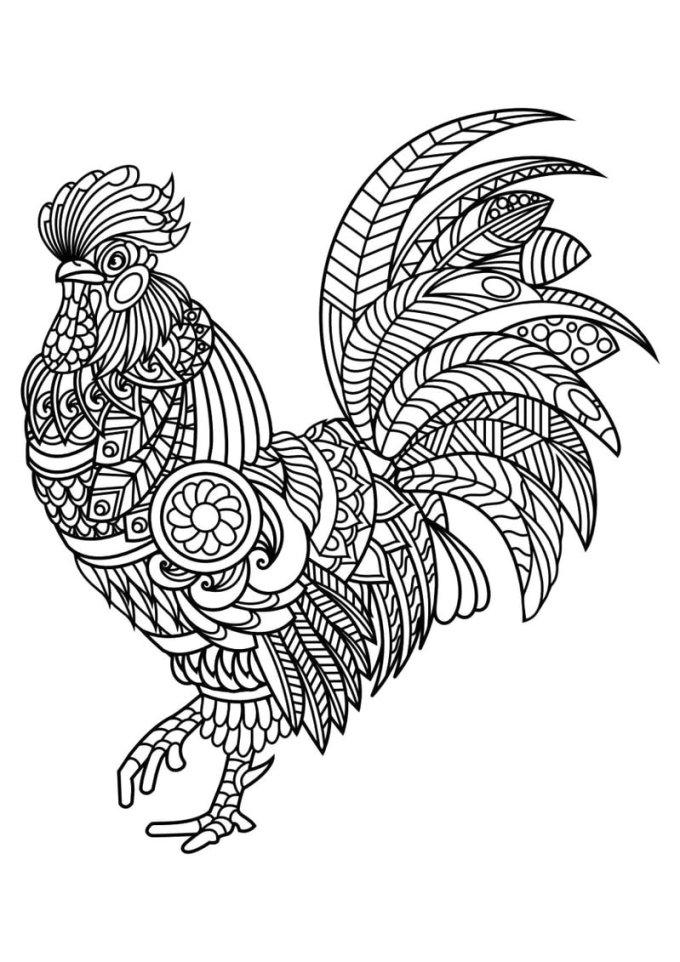 Sketsa ayam jago