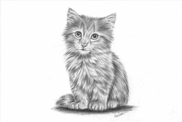 Gambar Sketsa Hewan Yang Lucu Dan Mudah Dibuat