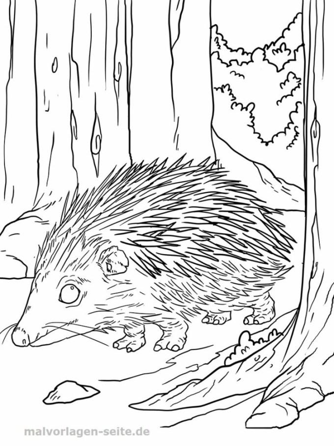 Gambar sketsa hewan landak