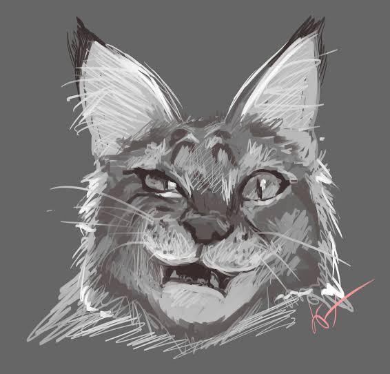 Sketsa kucing