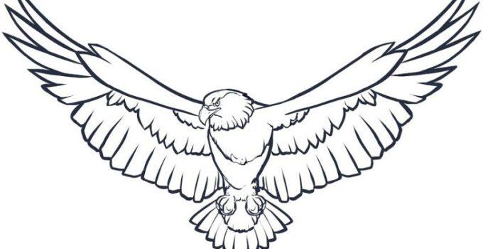 Gambar Sketsa Burung Keren Yang Mudah Dibuat Dan Diwarnai