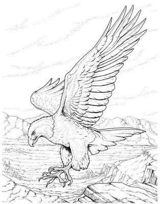 sketsa keren burung elang