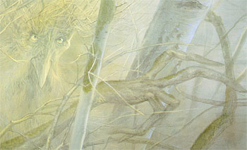 treebeard-detail
