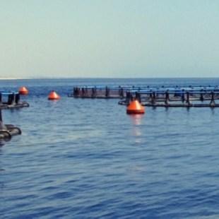 البيئة تطلق خدمة دعم شركات الاستزراع السمكي إلكترونيًا
