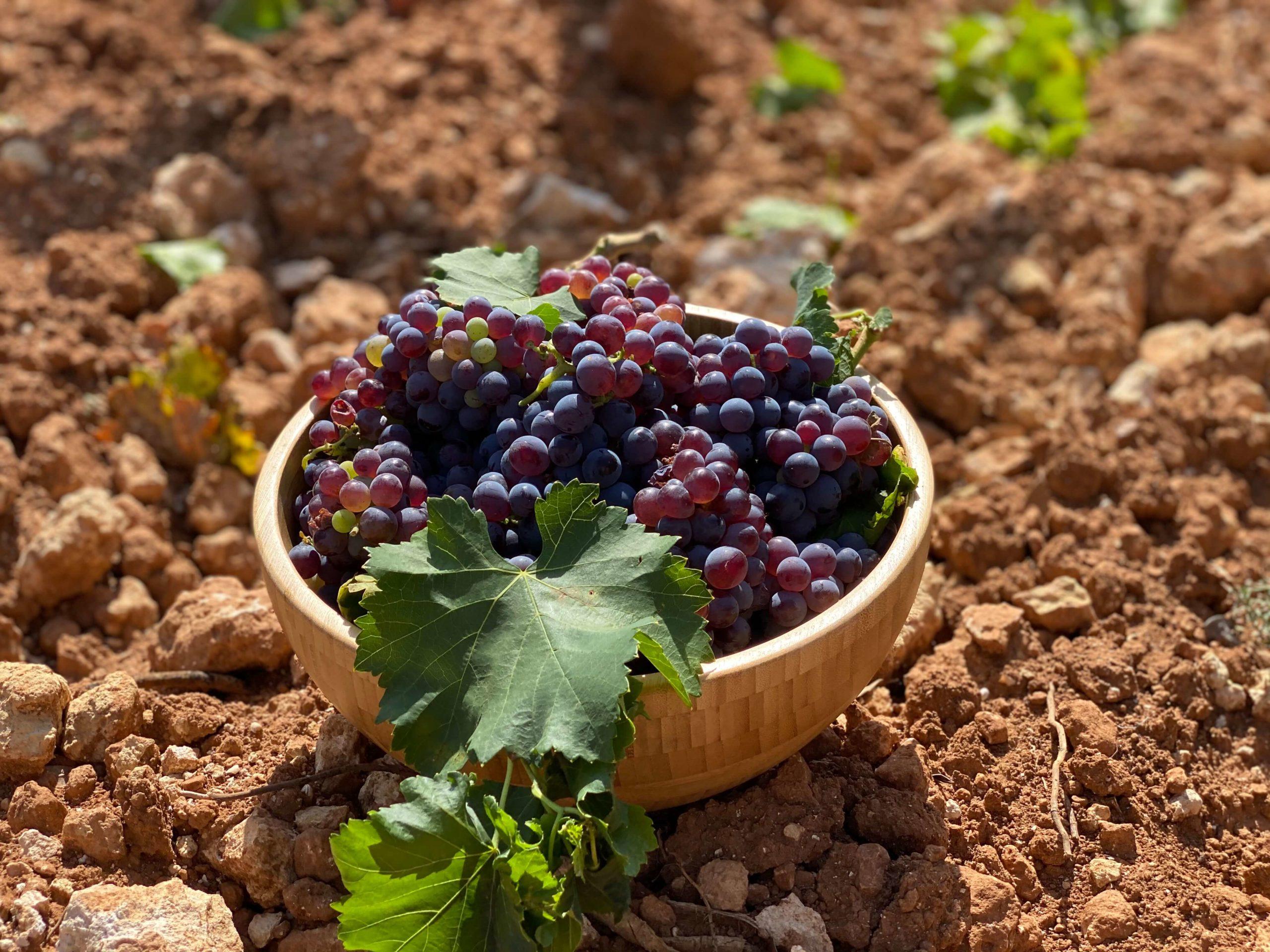 wine-makers-mallorca