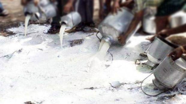 13 milk sellers arrested