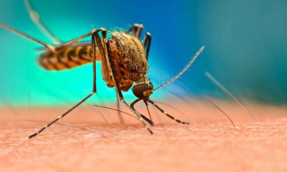 kpk health department released a report on dengue victims