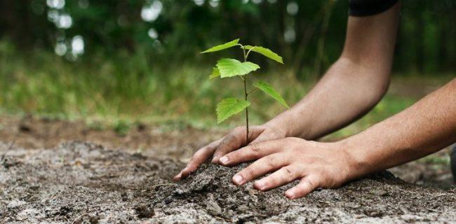 plant 750x369 750x369 1