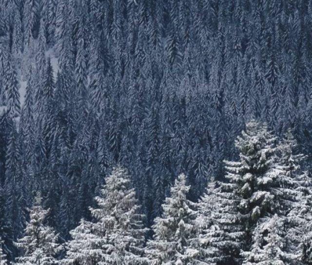 Winter Iphone X Wallpaper