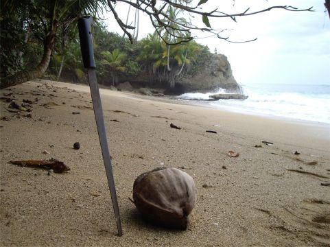 16 Un buen coco de la playa caribeña