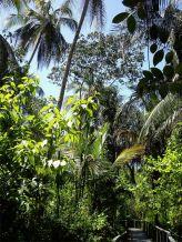 8 Paseo por Cahuita National Park