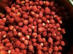 20 Pequeñas fresas de bosque