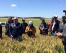 Interesados en el trigo bonaerense, molineros brasileños visitaron el sudeste y el sudoeste de la provincia
