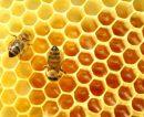 Apicultores pampeanos apuntan a la miel orgánica para afirmarse en los mercados internacionales