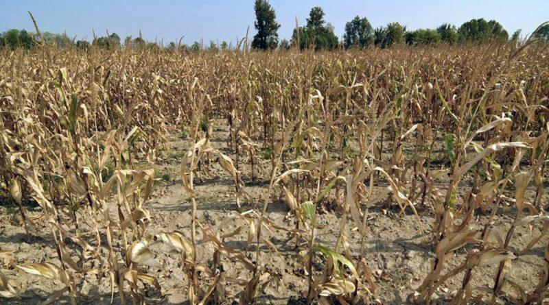 Sequía: sigue sin declararse la emergencia agropecuaria
