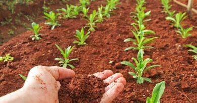 Argentina y Estados Unidos trabajarán juntos por la sustentabilidad en la producción agropecuaria