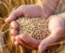 Destacan que la huella de carbono en la cadena del trigo argentino se encuentra por debajo de valores internacionales