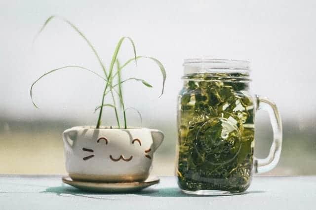 apa itu obat herbal, pengertian obat herbal, khasiat obat herbal, obat herbal berkualitas