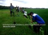 Penghijauan Desa Randegan Kecamatan Kebasen Banyumas Dalam Rangka Keanekaragaman Hayati 2016 (22)